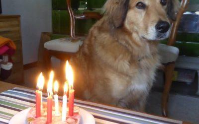 Pensionierter Blindenführhund berichtet